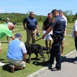 veterans dogs